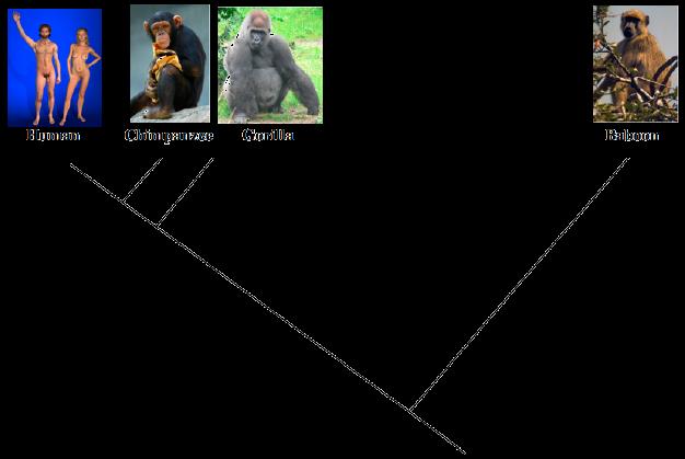 evolution content articles biology