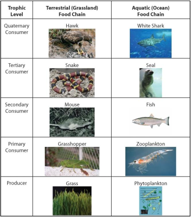 Flow Of Energy In Ecosystems Opencurriculum