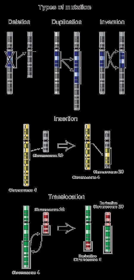 Genetic Mutation ‹ OpenCurriculum