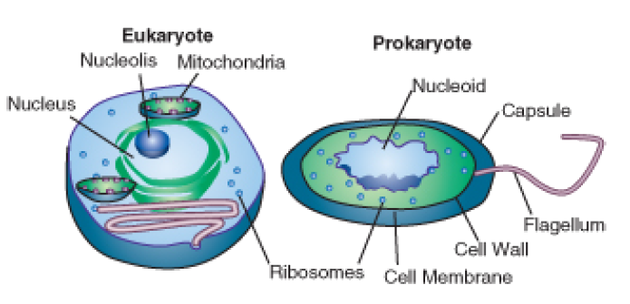 compare and contrast prokaryotic and eukaryotic cells essay