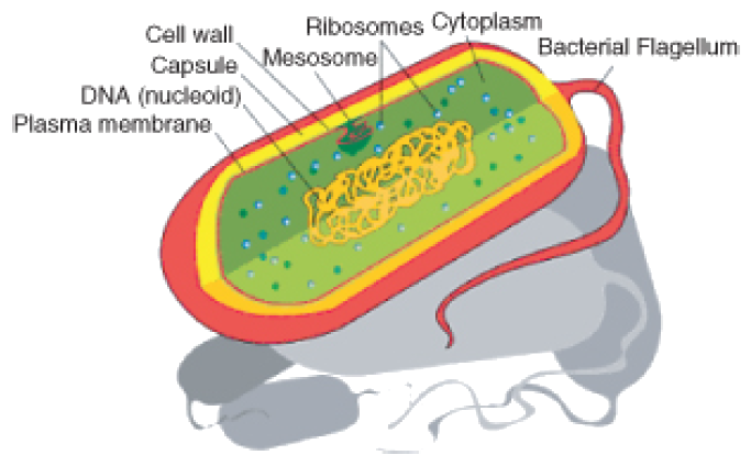 Organelles in sperm cell girl