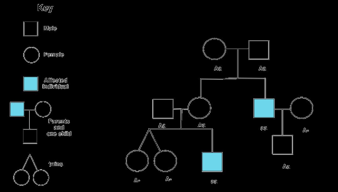 Mendelian Inheritance Opencurriculum