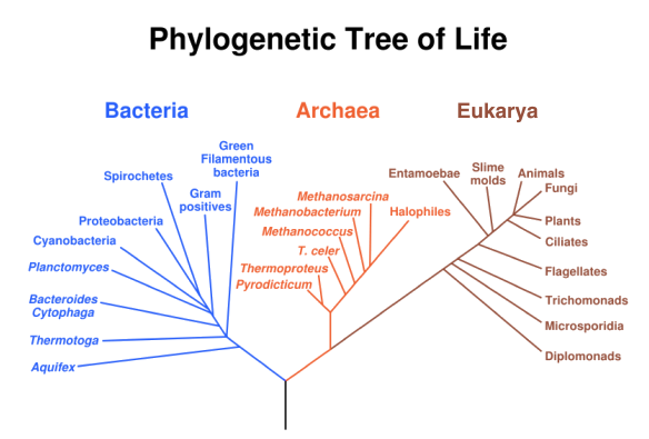 why is the gene coding for ribosomes rna rna used for establishing phylogenetic relationships A gene is a section of dna located at a  the genetic code used is the same in all  groups based on their evolutionary origins and relationships.