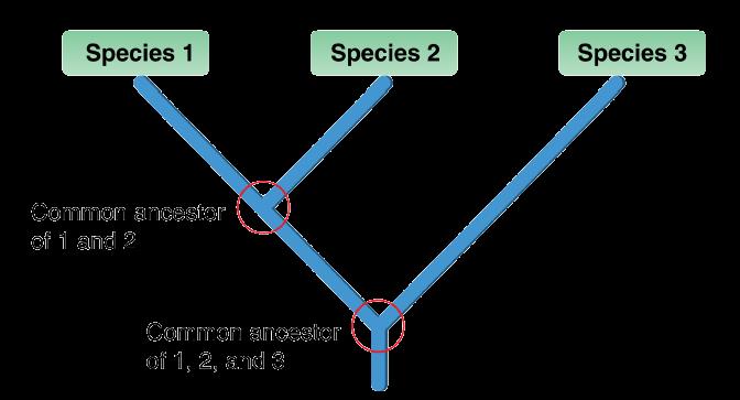 Phylogenetic Classification Opencurriculum
