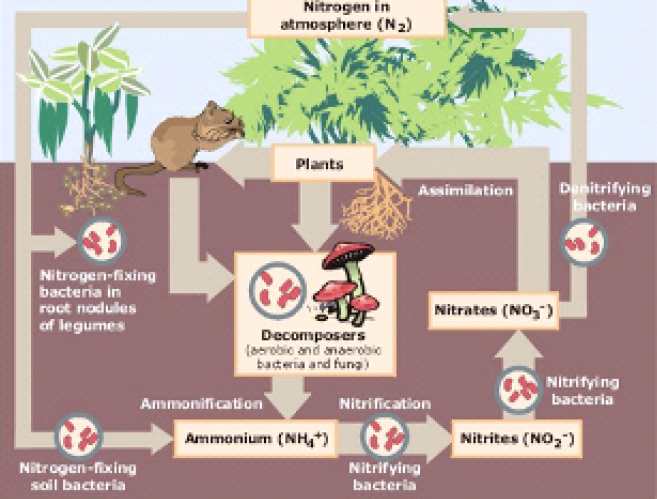 decomposition and recycling in aquatic ecosystems And decomposition, and implications on carbon and nutrient cycling, in aquatic and ter- restrial ecosystems furthermore, in view of their robustness, they may offer a template.